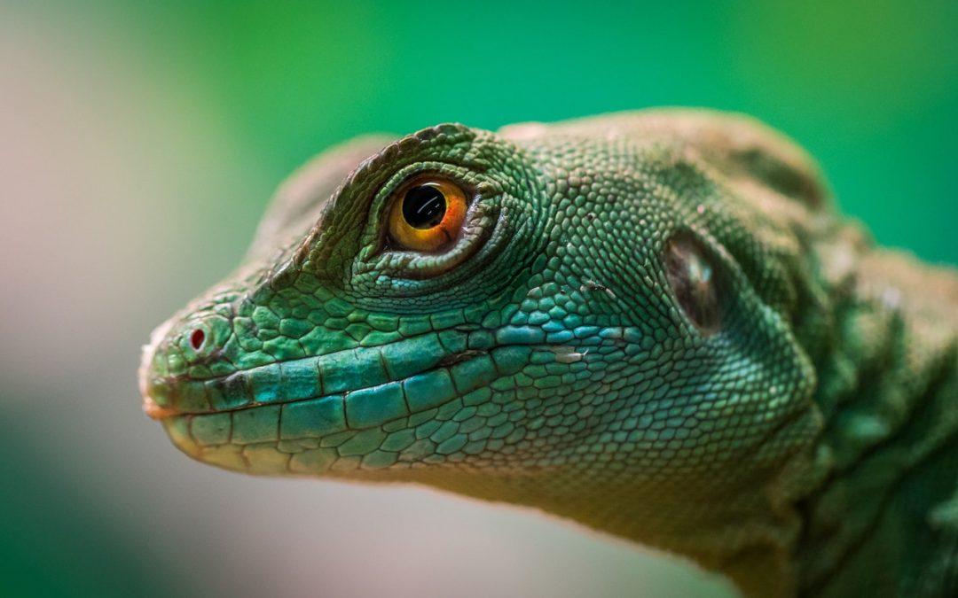 Charla y toca toca de reptiles & anfibios